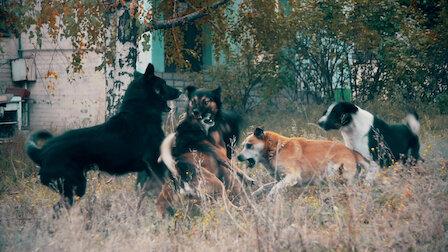 觀賞成群獵人。第 1 季第 5 集。